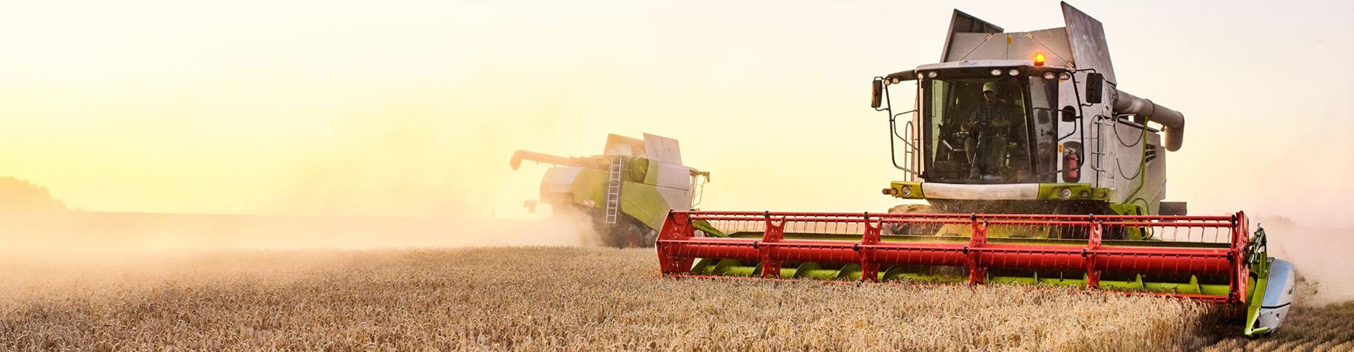 Les étapes clés de la récolte de céréales